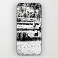 Rice field iPhone & iPod Skin