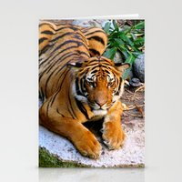 Pool Side Tiger Stationery Cards