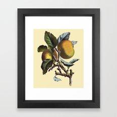 Vintage Apples Framed Art Print