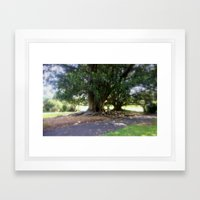Bare Rooted Framed Art Print