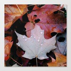 Sprinkle Leaf Canvas Print