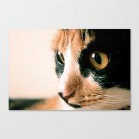 Thinking Cat Canvas Print