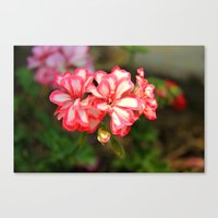 some nice flowers Canvas Print