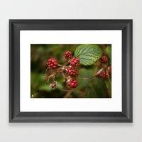 Summer Fruit Framed Art Print