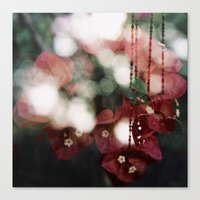 bouganvillea II Canvas Print