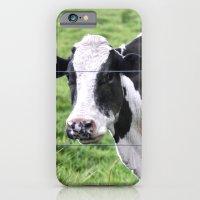 Cow  iPhone 6 Slim Case