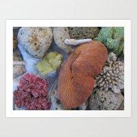 Coral Sea Treasures Art Print