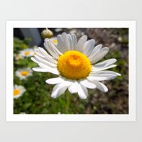 I dream of daisy Art Print