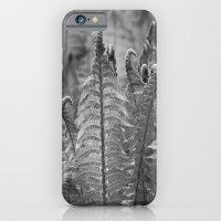 Dunvegan Ferns iPhone 6 Slim Case