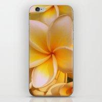 Frangipane iPhone & iPod Skin
