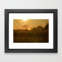 Delicate Grasses and Dew Framed Art Print