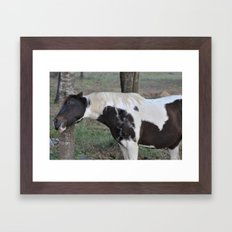 scratching an itch Framed Art Print