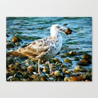 Catch of the Day Canvas Print