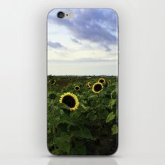 Sunflower Row iPhone & iPod Skin