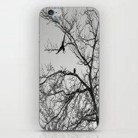 two crows iPhone & iPod Skin