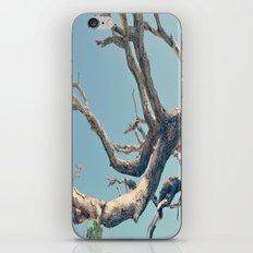 Driftwood Ladder iPhone & iPod Skin