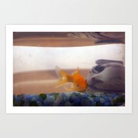 Fish In Trouble Art Print