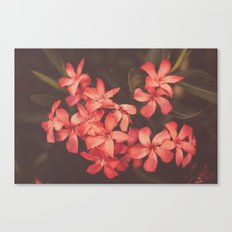 Coral Tales Canvas Print