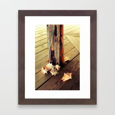Belizean Shells Framed Art Print