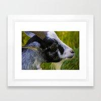 Goat - Are you kidding me? Framed Art Print