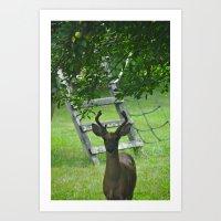 Observant Deer Art Print