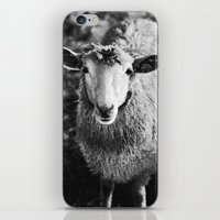 Sheep iPhone & iPod Skin