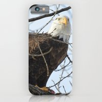Eagles of Wisconsin 1 - A Wildlife Art Print iPhone 6 Slim Case