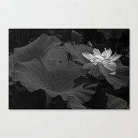Lotus Flower -467 Canvas Print