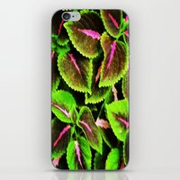 Coleus iPhone & iPod Skin