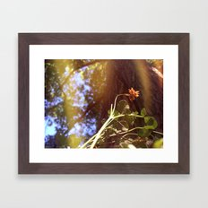 Little Flower Framed Art Print