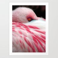 Sleeping Flamingo Art Print