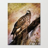 Young Eagle Pose II Canvas Print