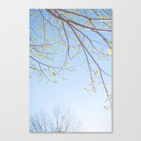 Spring Light. Canvas Print