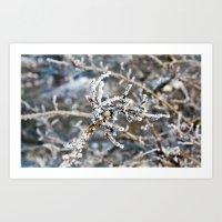 Iced Bush Art Print