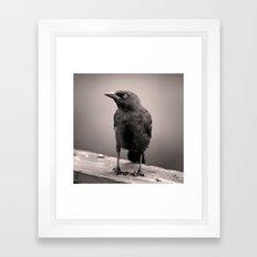 Goth Grackle Framed Art Print