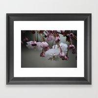 Zierapfel Blüte   Framed Art Print