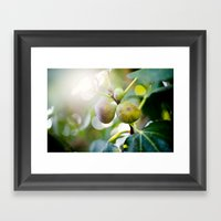 Figs Framed Art Print