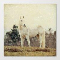 Lone Horse Canvas Print