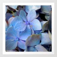 Hydrangea Happy Art Print