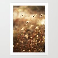 Fields Of Glory Art Print