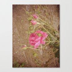 rose vintage Canvas Print