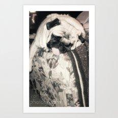 lazy pug Art Print