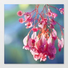 Angel Wing Begonia Canvas Print