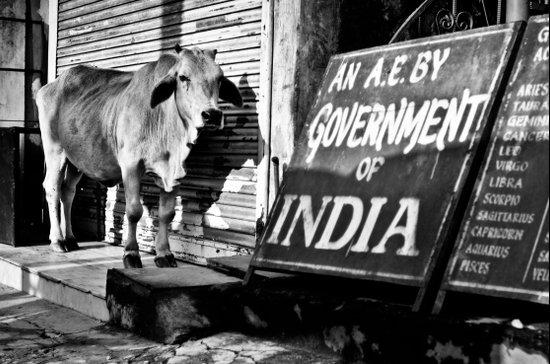 Indian gov. Art Print