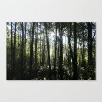 Morning Light Through Th… Canvas Print