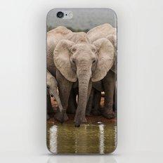 African Elephants iPhone & iPod Skin