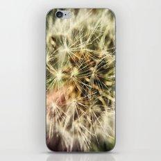 Dandelion Bliss iPhone & iPod Skin