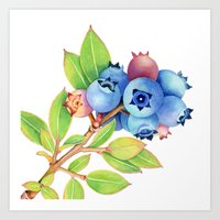 Wild Maine Blueberries Art Print