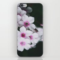 Summertime Phlox iPhone & iPod Skin