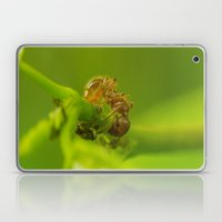 Red Ant close up Laptop & iPad Skin